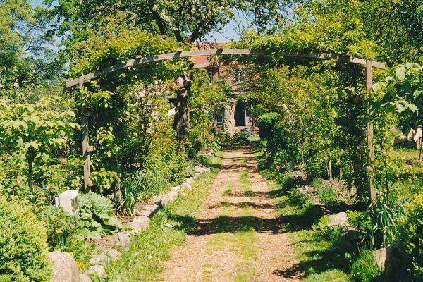 Kraeuter-Garten-bearbeitet